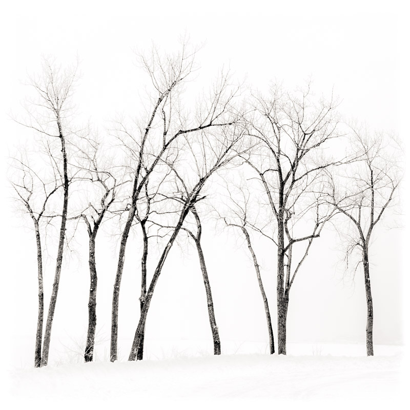 Winter Trees Along Lake Erie, 2014