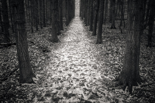 Dark Cold Path, 2014