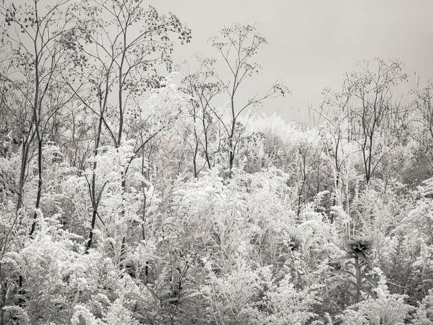 Wildflower Forest, 2012