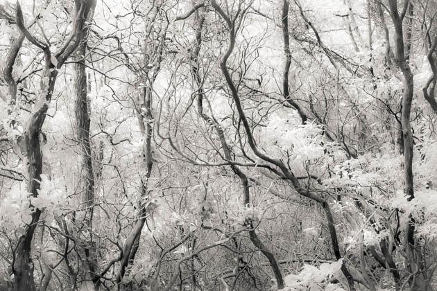 Van Gogh Woodland, 2013