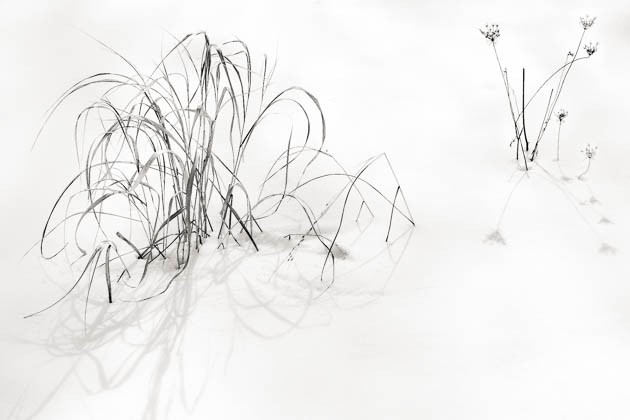 Grass and Snow, 2014