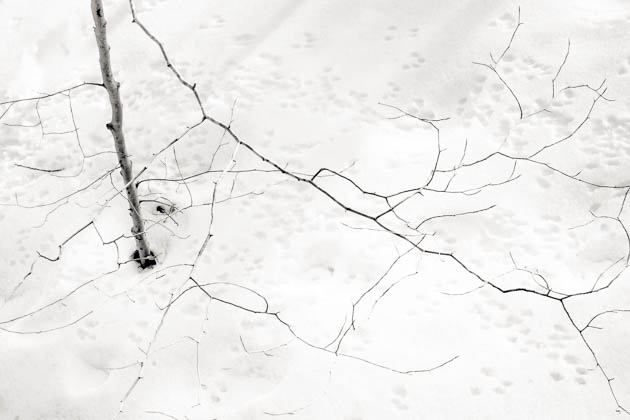 Fine Branches and Fallen Snow, 2014