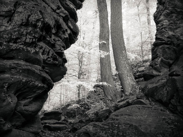 Two Trees at Whipp's Ledges, 2011