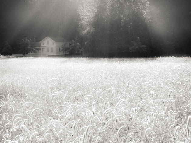 House and Sunlit Dew, 2012