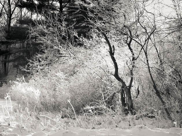 Winter Sun, 2013