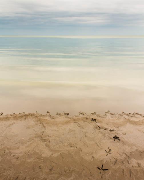 Beach with Bird Tracks, 2013