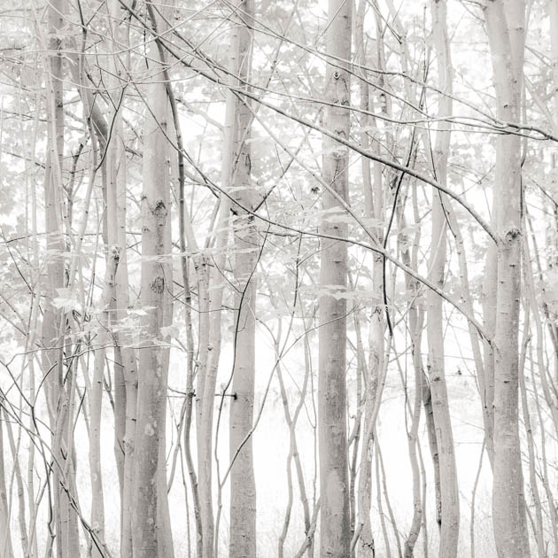 Trees and Light, 2013