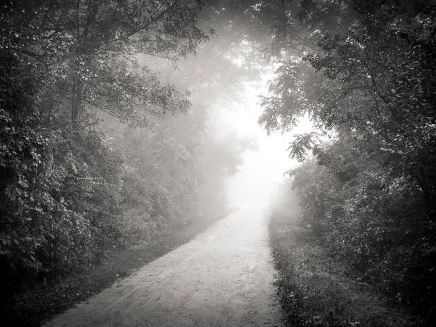 Path and Rising Fog, 2012