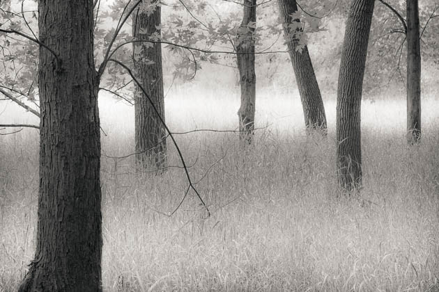 Trees and Grasses, 2012