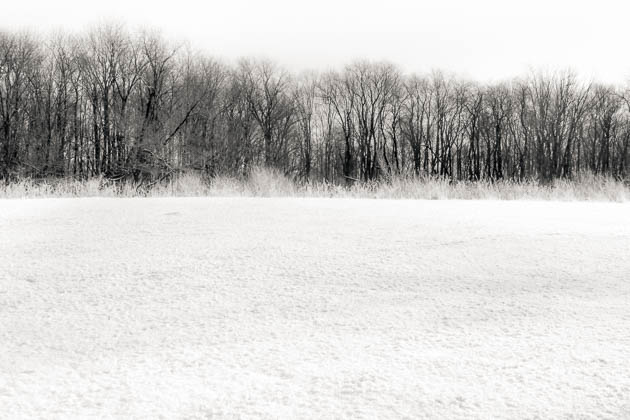 Winter Trees and Field, 2013
