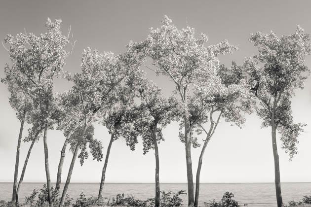 Summer Trees on Lake Erie, 2013