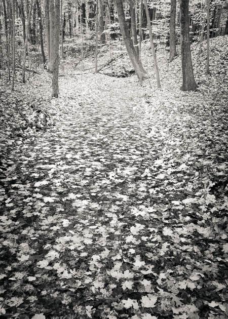 Fallen Leaves, 2013