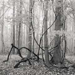 Go to: Entanglement