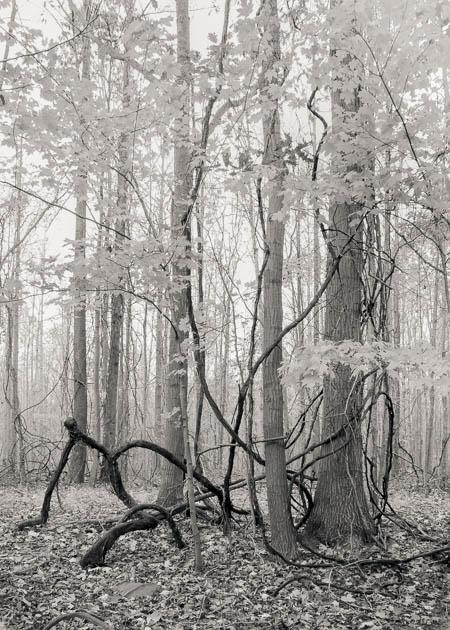 Entanglement, 2014