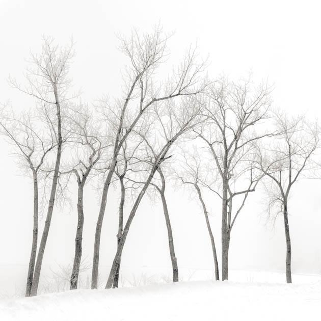 Winter Trees Along Lake Erie, 2014