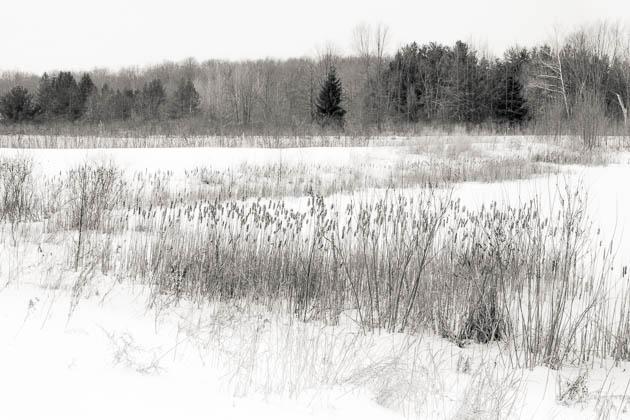 Wetlands in Winter, 2014