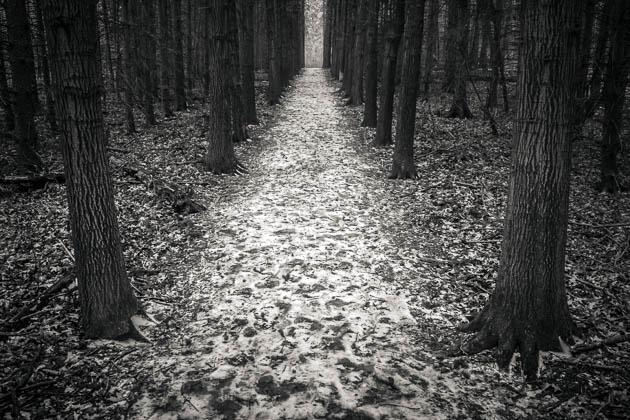 Dark Cold Path, 2014