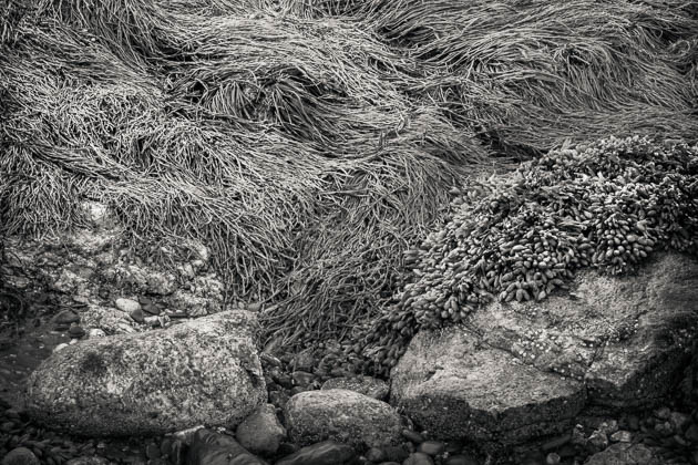 Low Tide, Ocean Point, East Boothbay, 2014
