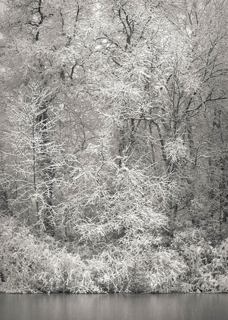 Snow, Trees and Water, 2014