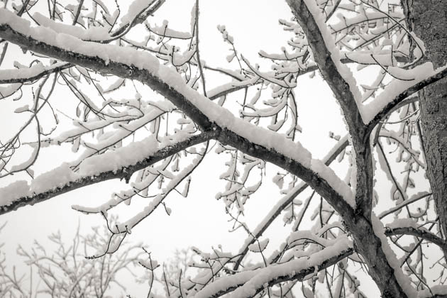 Winter Branches, 2014