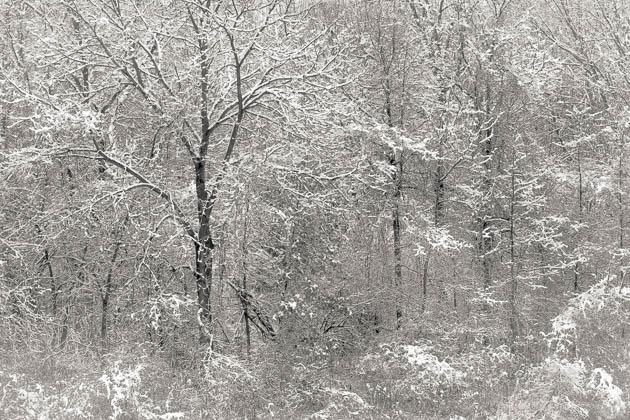 Snow on Trees, 2014