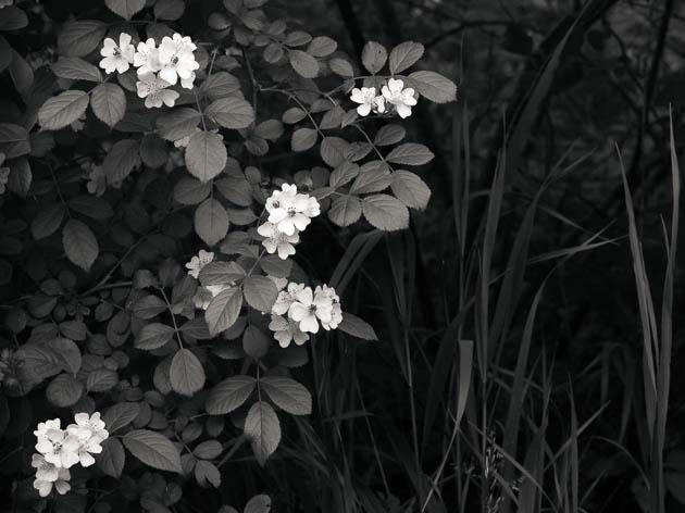 Wild Blooms, 2015