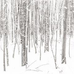 Go to: Winter Coat