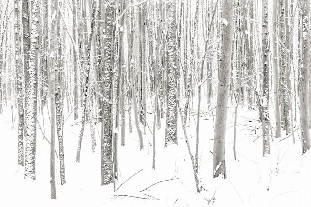 Snow Blown Woodland, 2016