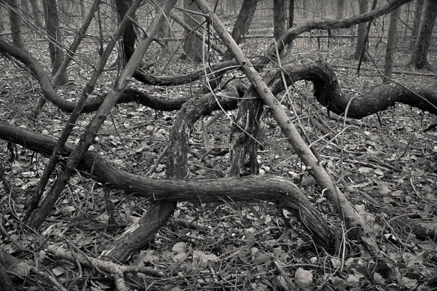 Thick Vines, 2016