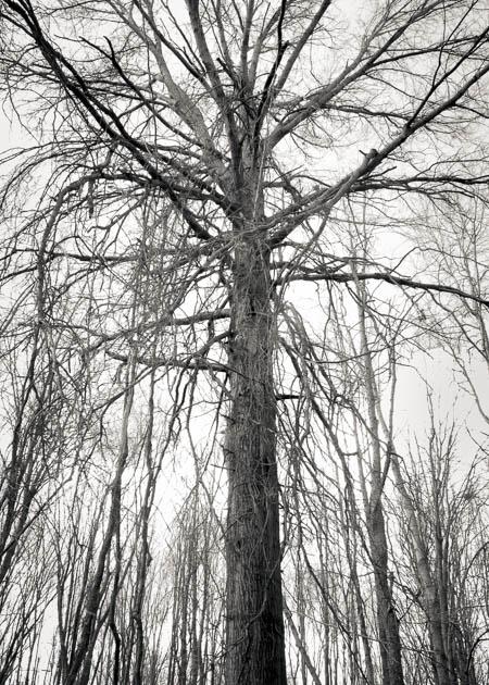 April Tree, 2016